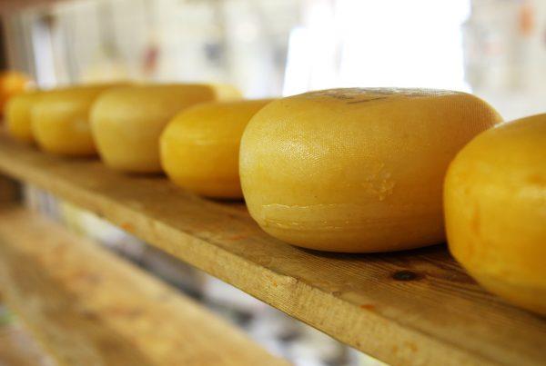 Forme di formaggio circolare